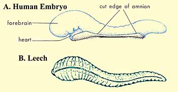 Islam Guide: The Quran on Human Embryonic Development