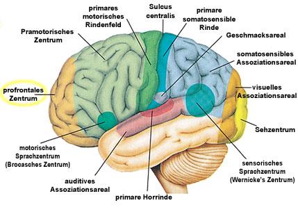 Der Koran über das Gehirn