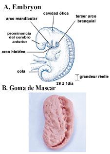 Figura 6  (Haga click aquí para agrandar la imagen)