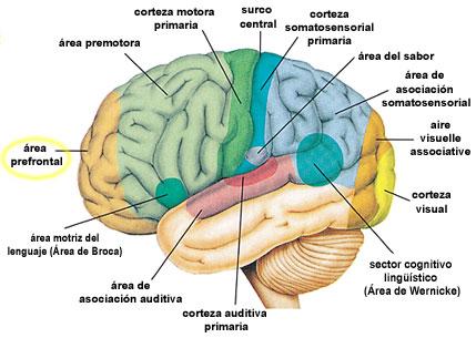 Figura 12 (Haga click aquí para agrandar la imagen)