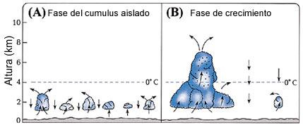 Figura 19 (Haga click aquí para agrandar la imagen)