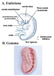 Figura 6 (Fare clic qui per ingrandire)